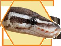 feeding-tips-snake_23